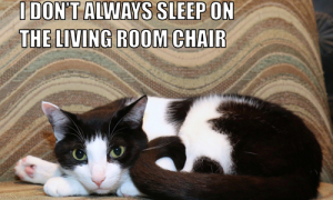 I Don't Always Sleep On The Living Room Chair #MostInterestingCatInTheWorld