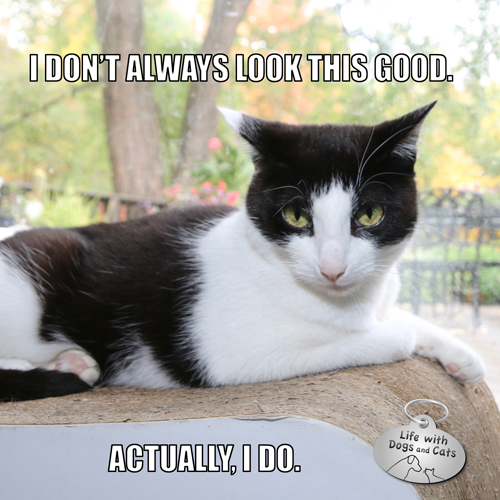 I don't always look this good. Actually, I do. #MostInterestingCatInTheWorld