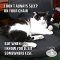 I don't always sleep on your chair, but when I do I know you'll sit somewhere else. Most Interesting Cat In The World