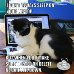 I Don't Always Sleep On Your Laptop #MostInterestingCatInTheWorld