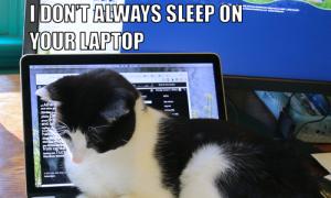 I Don't Always Sleep On Your Laptop #MostInterestingCatInTheWorld
