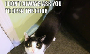 I Don't Always Ask You To Open The Door #MostInterestingCatInTheWorld