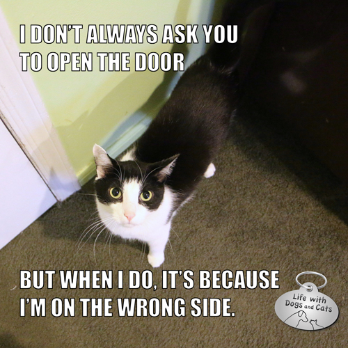 I Don't Always Ask You To Open The Door But when I do, it's because I'm on the wrong side.