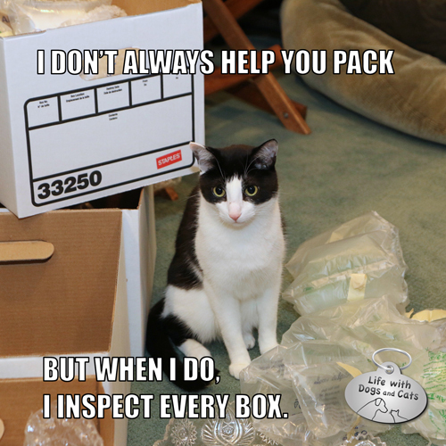 I Don't Always Help You Pack but when I do, I inspect every box. #MostInterestingCatInTheWorld
