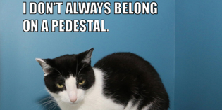 I Don't Always Belong On A Pedestal #MostInterestingCatInTheWorld
