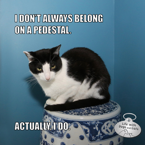 I Don't Always Belong On A Pedestal  Actually, I do. ##MostInterestingCatInTheWorld