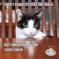 I don't always sit at the table #MostInterestingCatInTheWorld