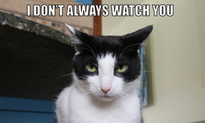 I Don't Always Watch You #MostInterestingCatInTheWorld