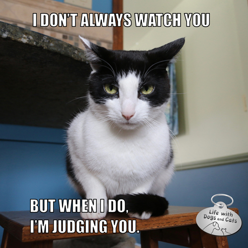 I don't always watch you, but when I do, I'm judging you. #MostInterestingCatInTheWorld