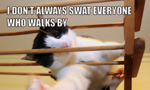 I Don't Always Swat Everyone Who Walks By #MostInterestingCatInTheWorld