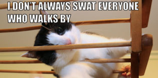 I Don't Always Swat Everyone Who Walks By #MostInterestingCatInTheWorld