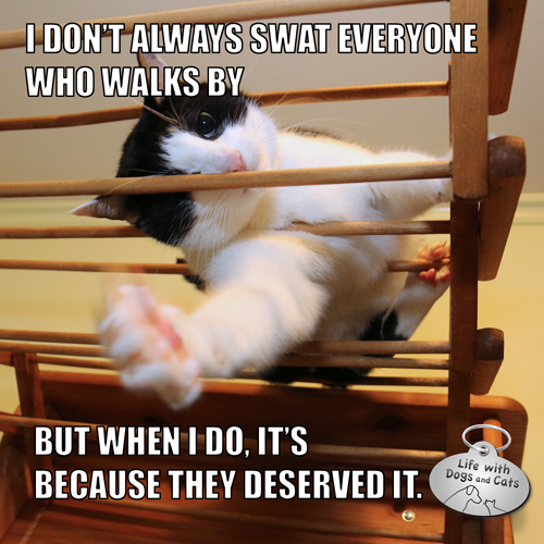 I don't swat everyone who walks by But when I do, it's because they deserved it. #MostInterestingCatInTheWorld