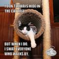 I don't always hide in the cat tree, but when I do, I swat everyone who walks by. #MostInterestingCatInTheWorld