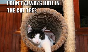 I Don't Always Hide In The Cat Tree #MostInterestingCatInTheWorld