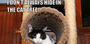 I Don't Always Hide In The Cat Tree #MostInterestingCatInTheWorld