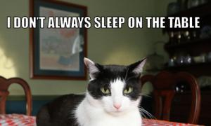 I Don't Always Sleep On The Table #MostInterestingCatInTheWorld