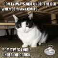 I Don't Always Hide Under The Bed When Company Comes. The Most Interesting Cat In The World