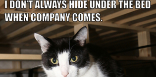 I Don't Always Hide Under The Bed When Company Comes #MostInterestingCatInTheWorld