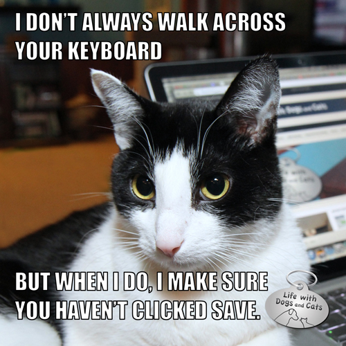 I don't always walk across your keyboard, but when I do, I make sure you haven't clicked Save. — Calvin T. Katz, The Most Interesting Cat In The World.