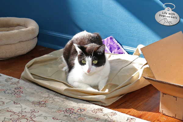 Calvin rests on a pile of bags