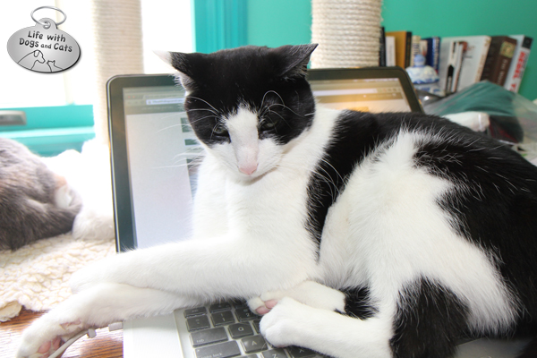 Calvin cat: You want to use your laptop?