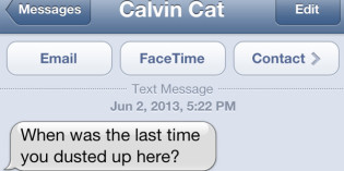 Text from Cat: Dust up