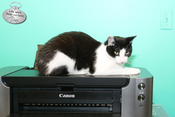 Calvin cat on printer: You wanted to print something?