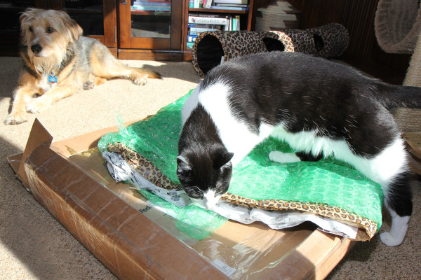 Calvin the cat goes right for the box. And the bubble wrap