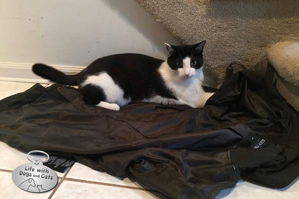 Calvin lies on the raincoat.