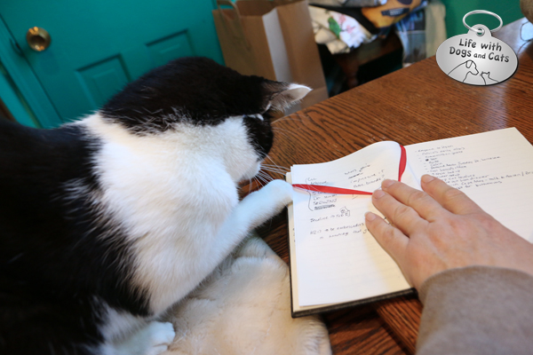 A simple ribbon on my notebook becomes a toy for Calvin — temporarily.