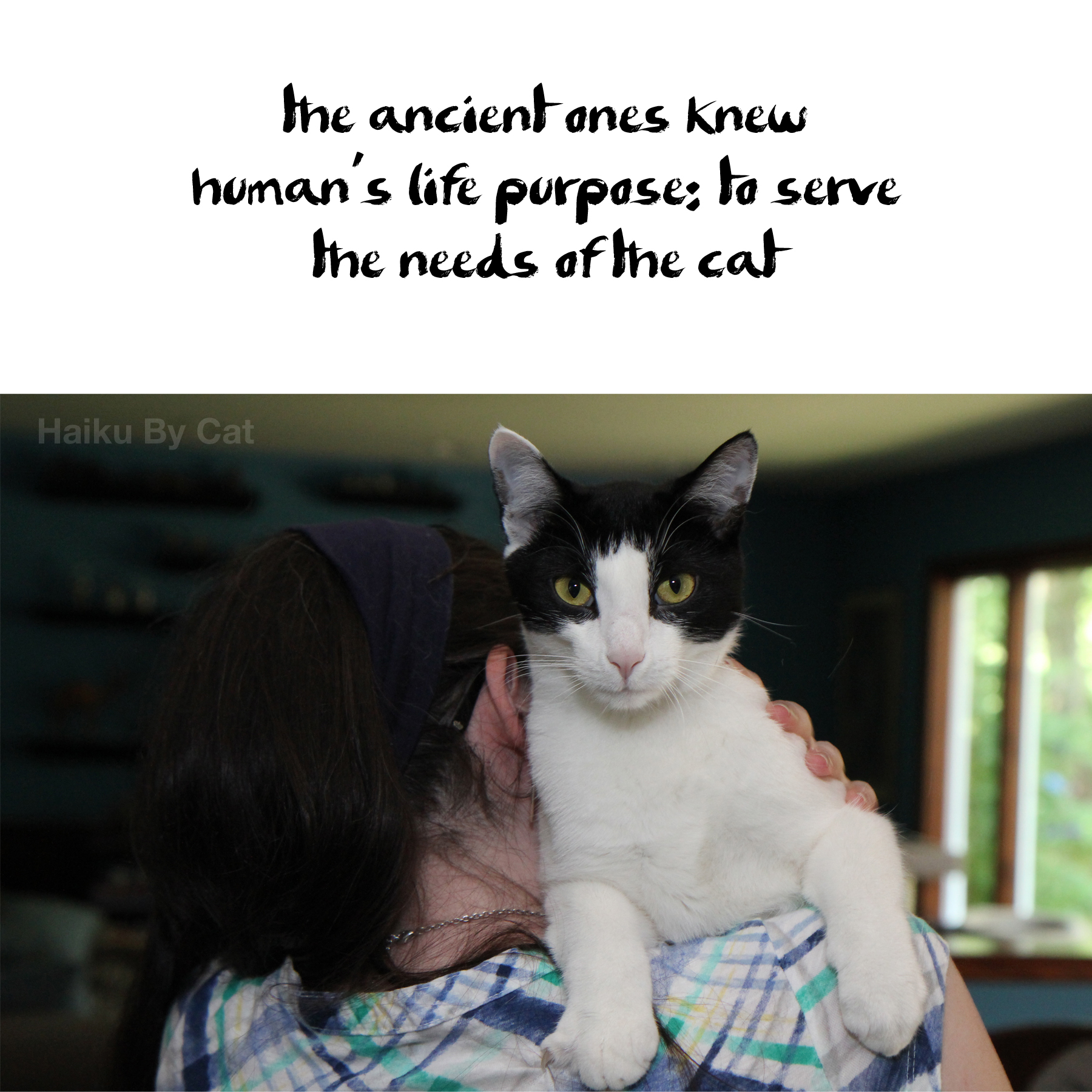 Haiku by cat: Haiku by cat: the ancient ones knew / human's life purpose: to serve / the needs of the cat