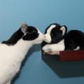 Cat meets plush cat.
