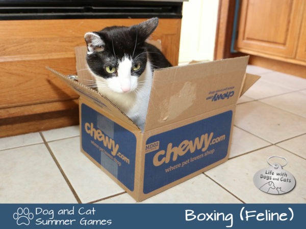 Dog and Cat Summer Games: Boxing