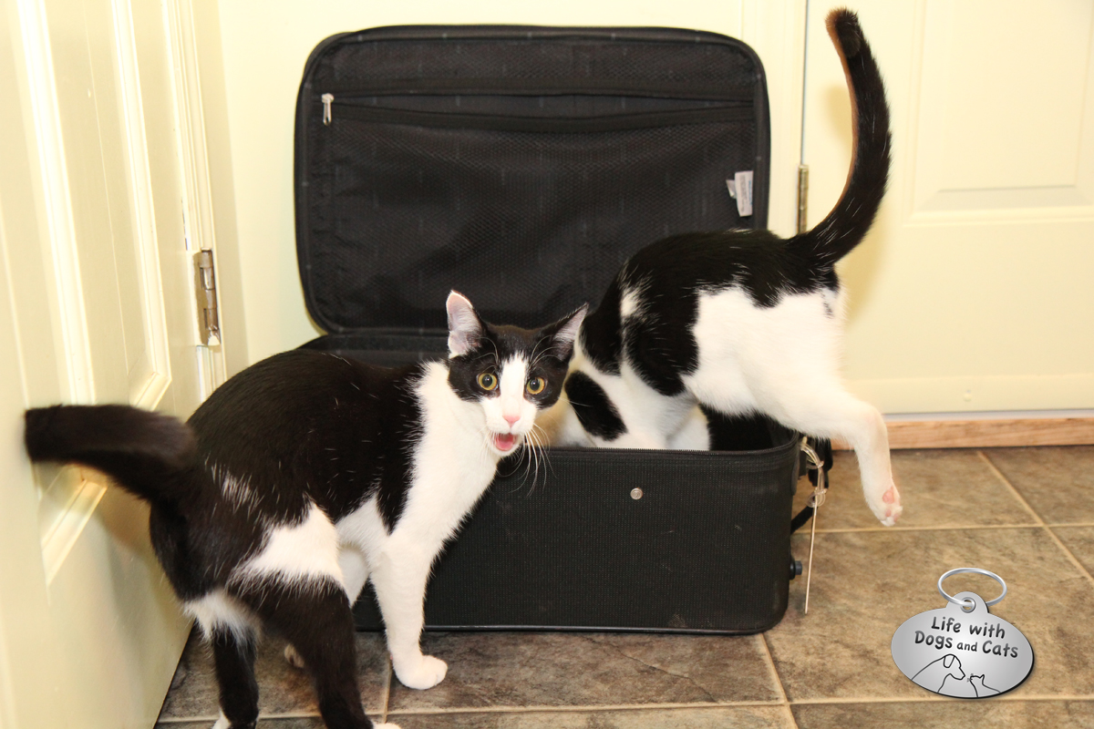 Calvin and Elsa Clair look like they're caught in the act of trying to stow away.