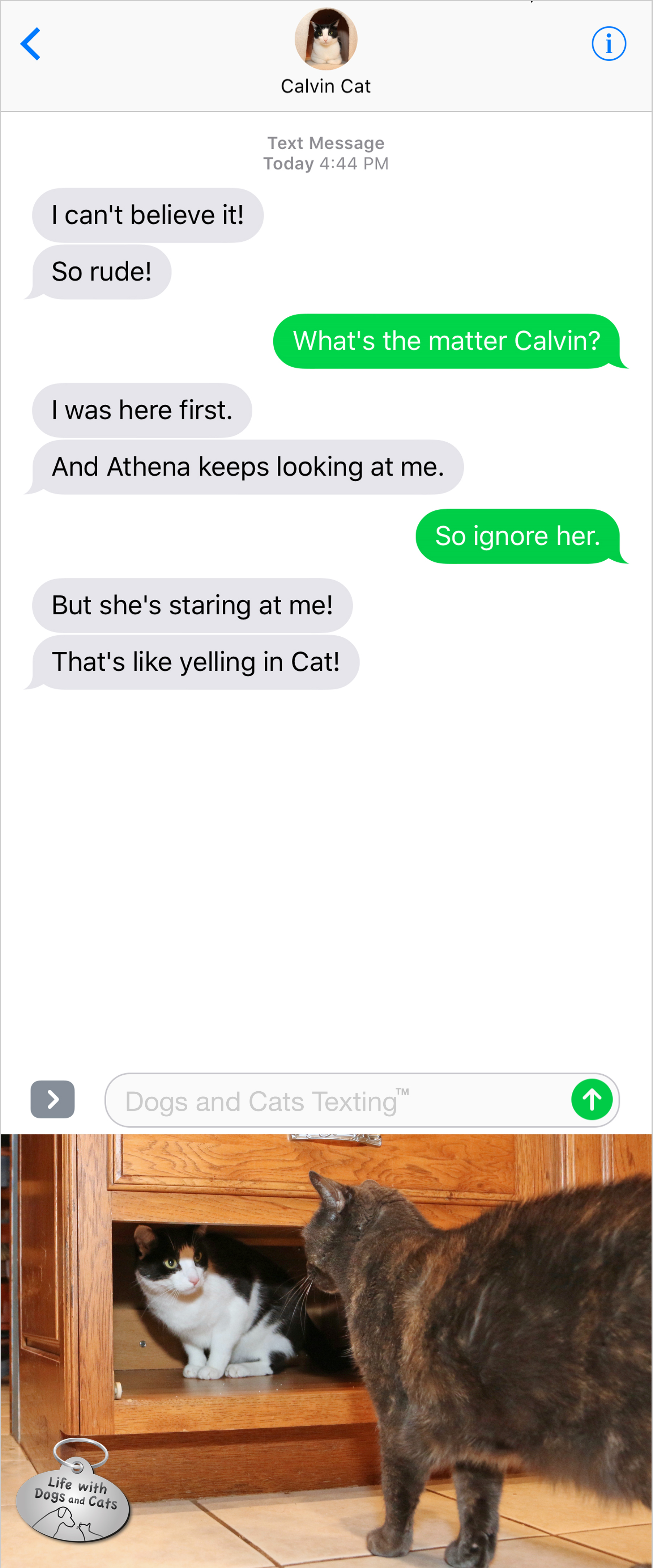 #TextFromCat I can't believe it! So rude! Me: What's the matter Calvin? Cat: I was here first. And Athena keeps looking at me. Me: So ignore her. Cat: But she's staring at me! That's like yelling in Cat!