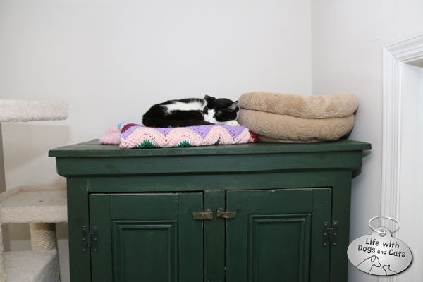 The tops of cabinets and shelves are reserved for cats.