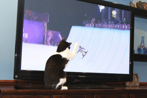 Cat watches Halfpipe snowboarding