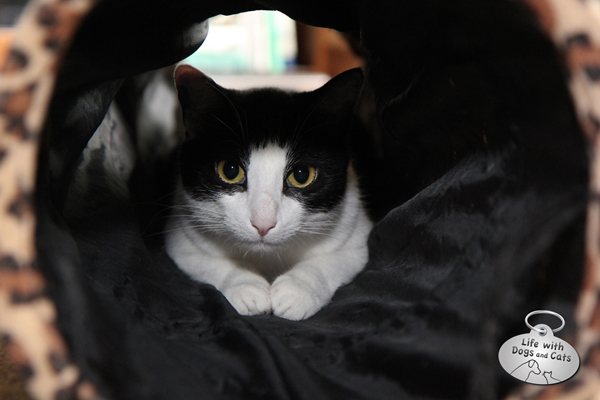 Calvin hiding in the tunnel