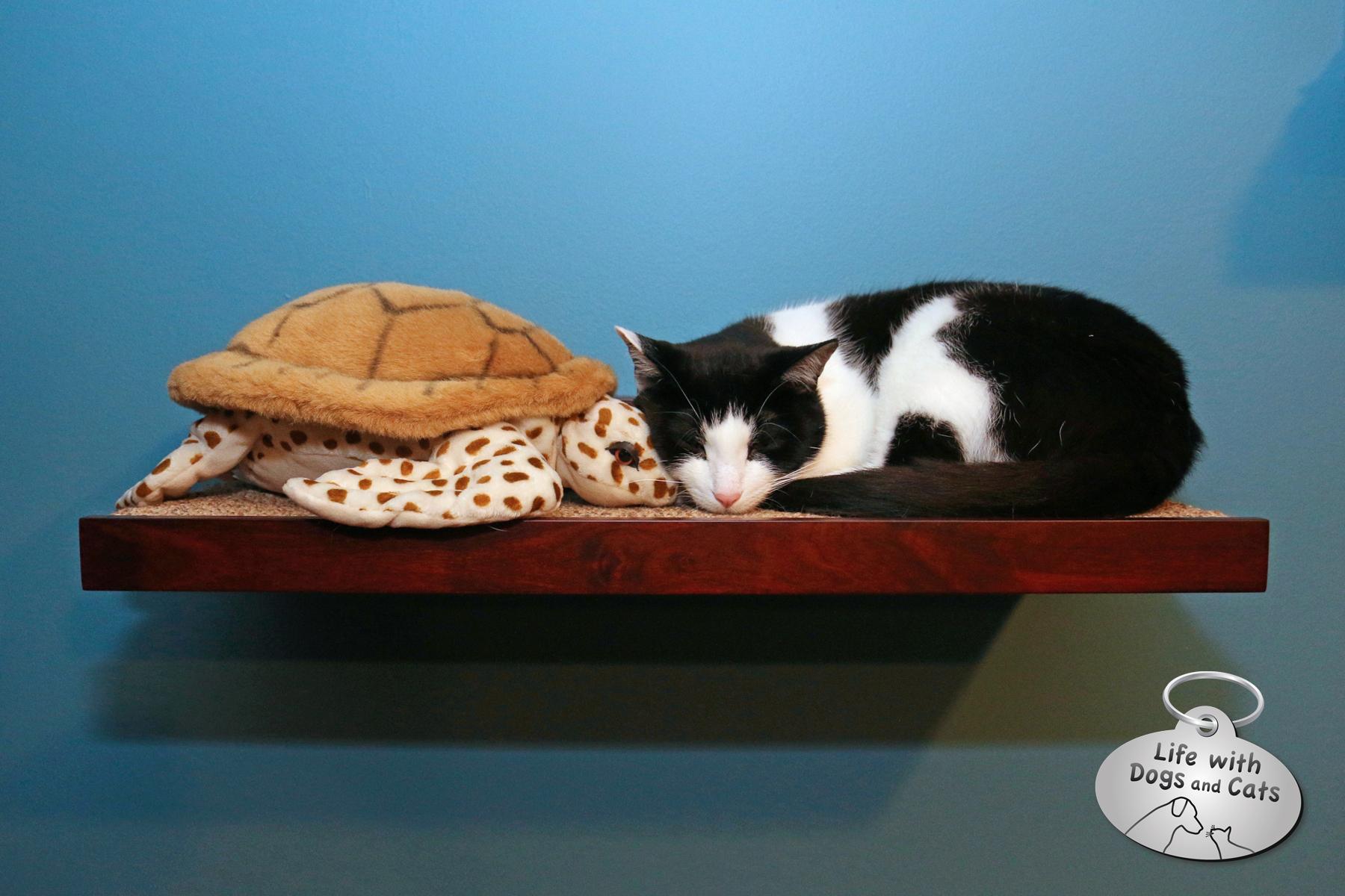 Do Cats Like To Sleep High Up
