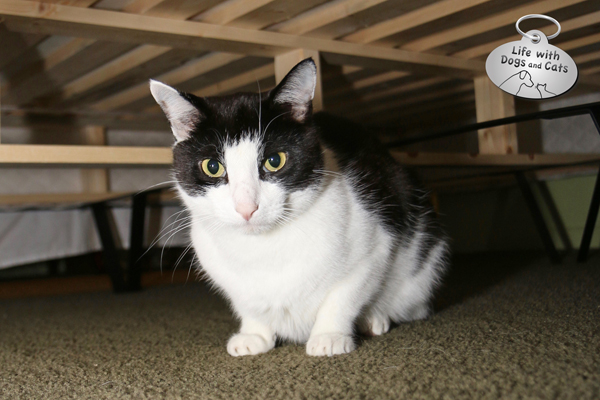 One of Calvin's favorite spots is under our bed. There's lots of room, and he feels safe.