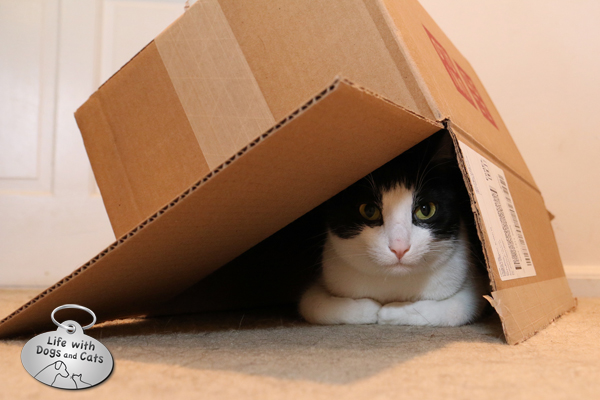 Boxes aren't just good for being in; they're also good for hiding under.