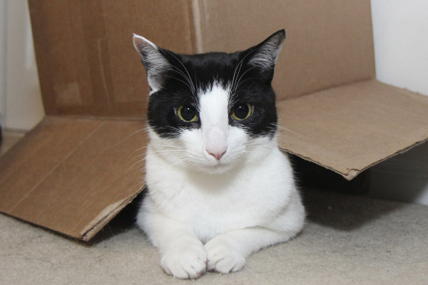 Reasons cats love boxes: They don't make you look fat.