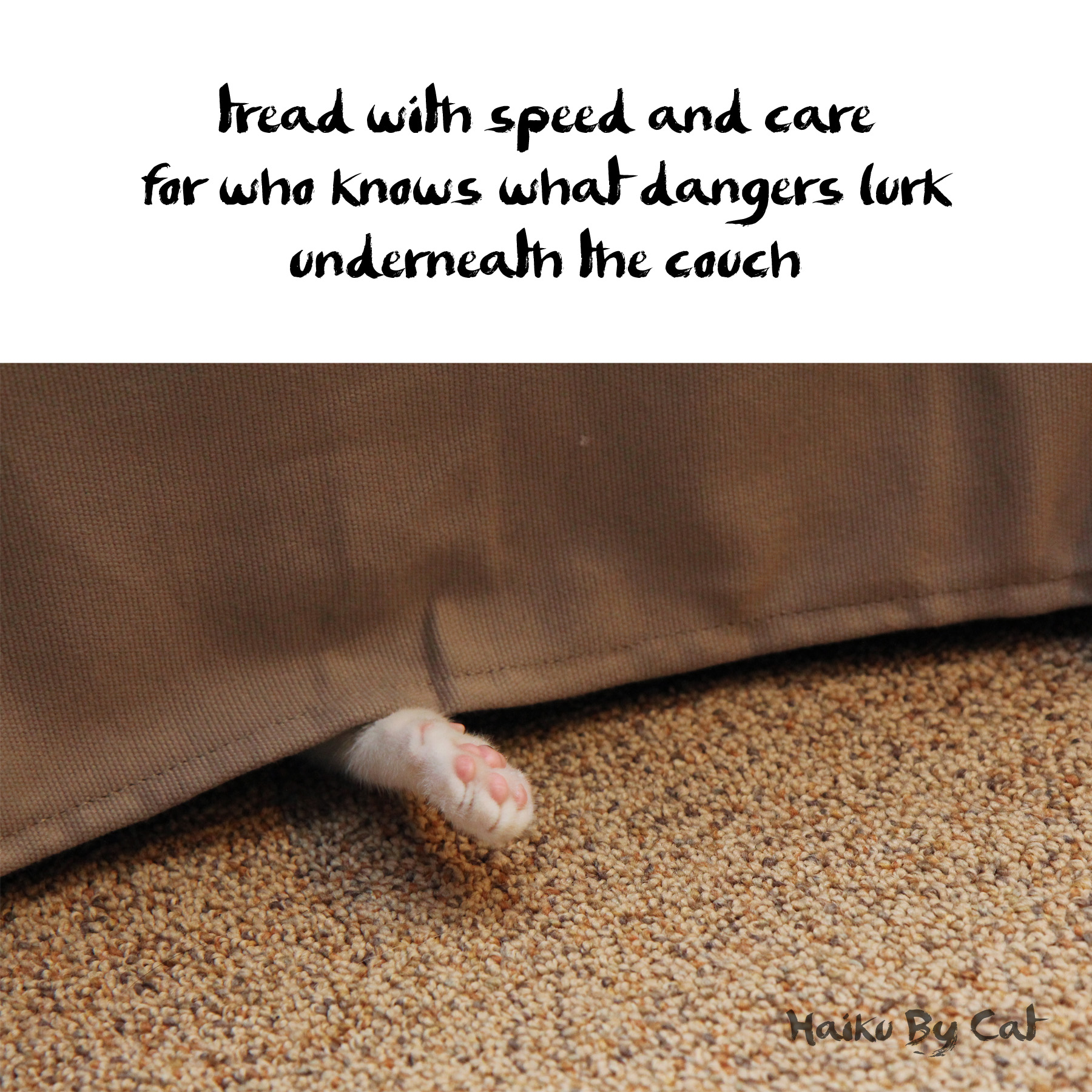 Haiku by Cat: tread with speed and care / for who knows what dangers lurk / underneath the couch
