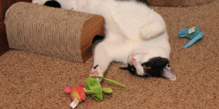 17 ways my cats celebrate World Cat Day
