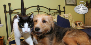 Live, Learn & Love: Dog and Cat Friendship