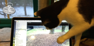 Cat Video: Calvin Plays Catch that Dog