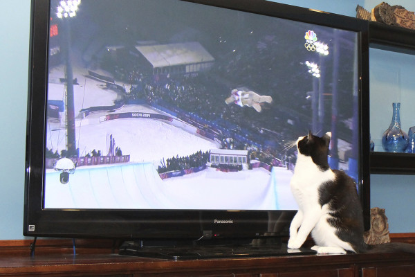 Cat watches Olympic snowboarding, soaring on the halfpipe
