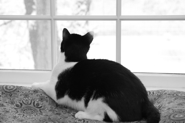 Calvin loves watching the snow...and the birds.