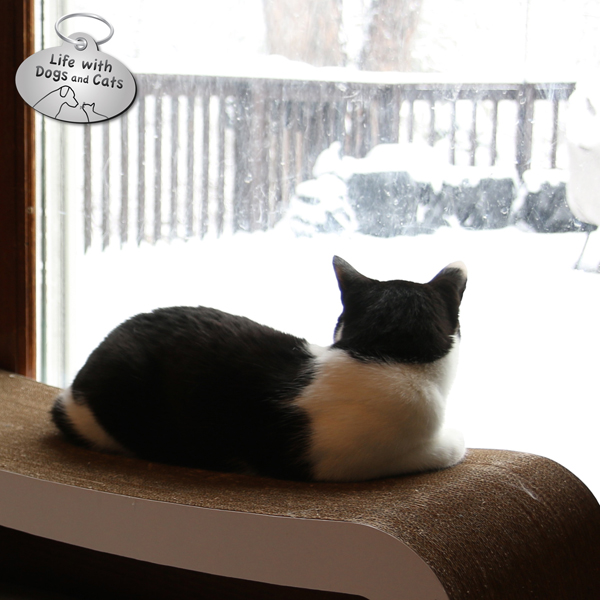 Calvin watching snow on the first day of spring
