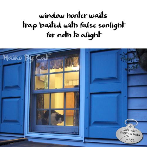 Haiku by Cat: window hunter waits / trap baited with false sunlight / for moth to alight